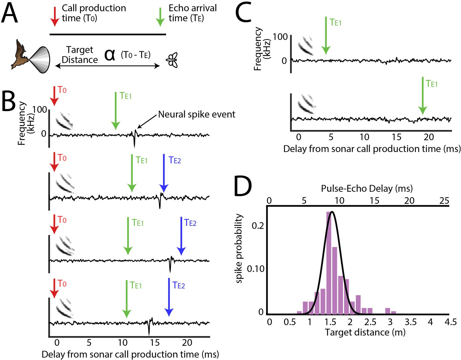 Dynamic representation of 3D auditory space in the midbrain
