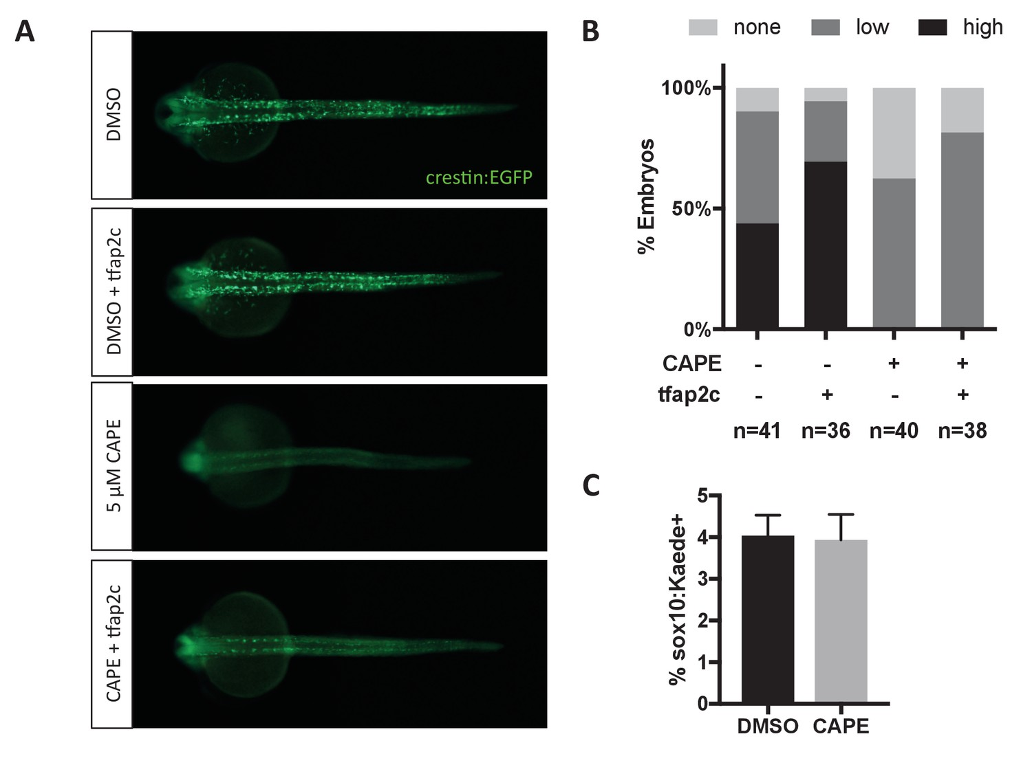 A chemical screen in zebrafish embryonic cells establishes that Akt