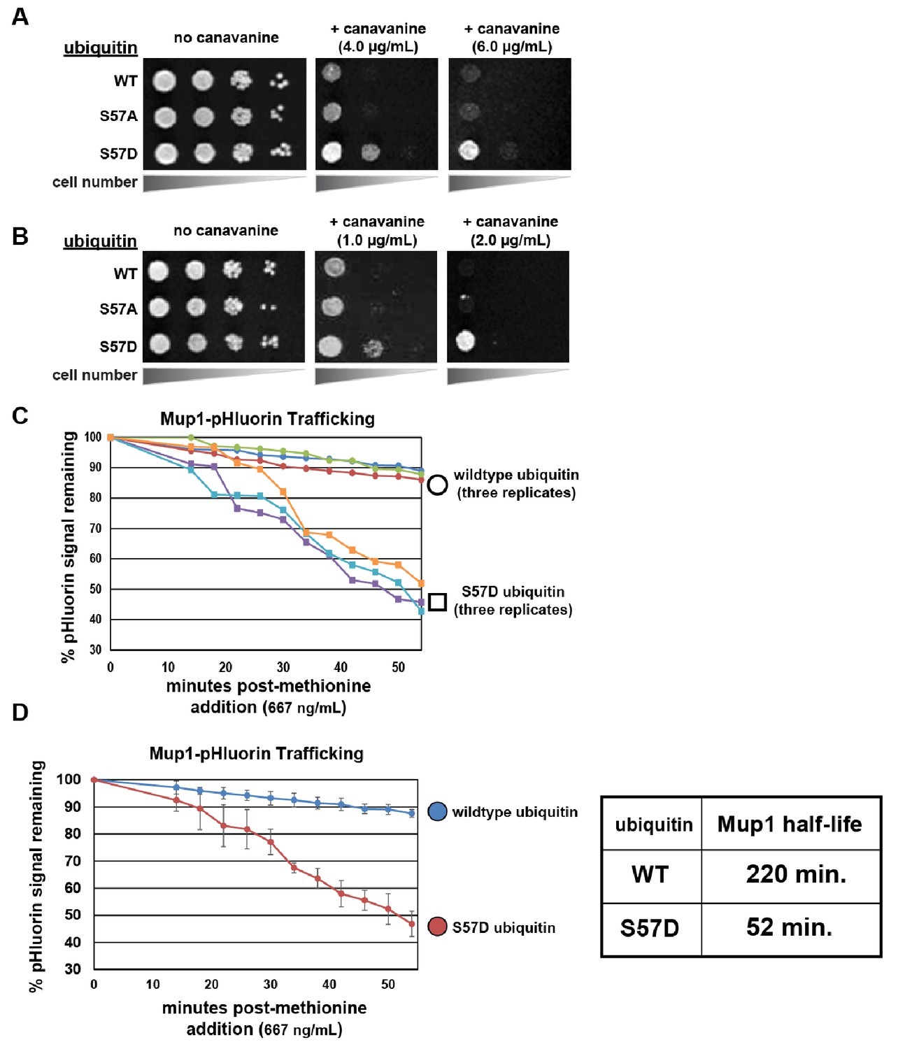 Ubiquitin turnover and endocytic trafficking in yeast are