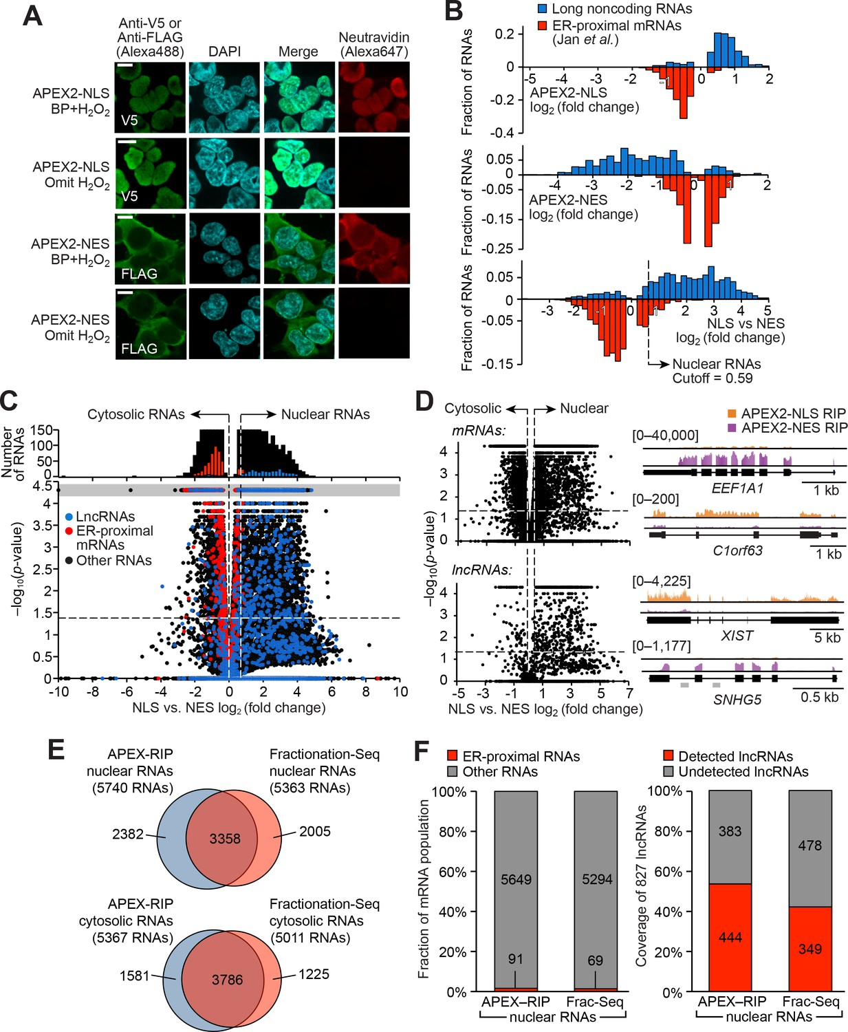 Live-cell mapping of organelle-associated RNAs via proximity