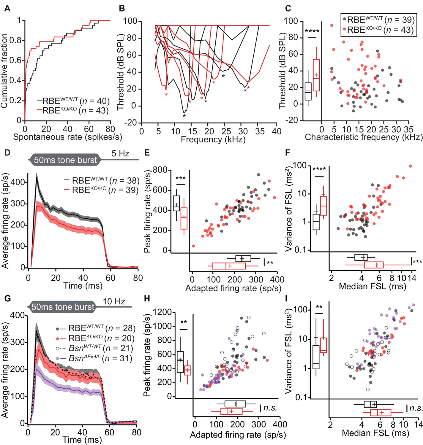 The Synaptic Ribbon Is Critical For Sound Encoding At High Rates And 1978 Ford F 150 Column Wiring Diagram Impaired Spontaneous Evoked Firing In Putative Sgns Of Rbeko Ko Mice