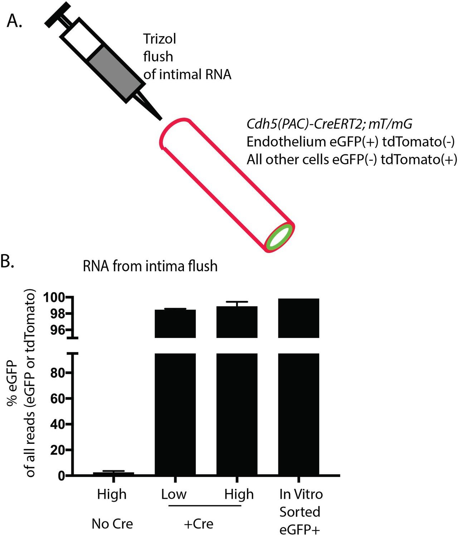 Alternative RNA splicing in the endothelium mediated in part