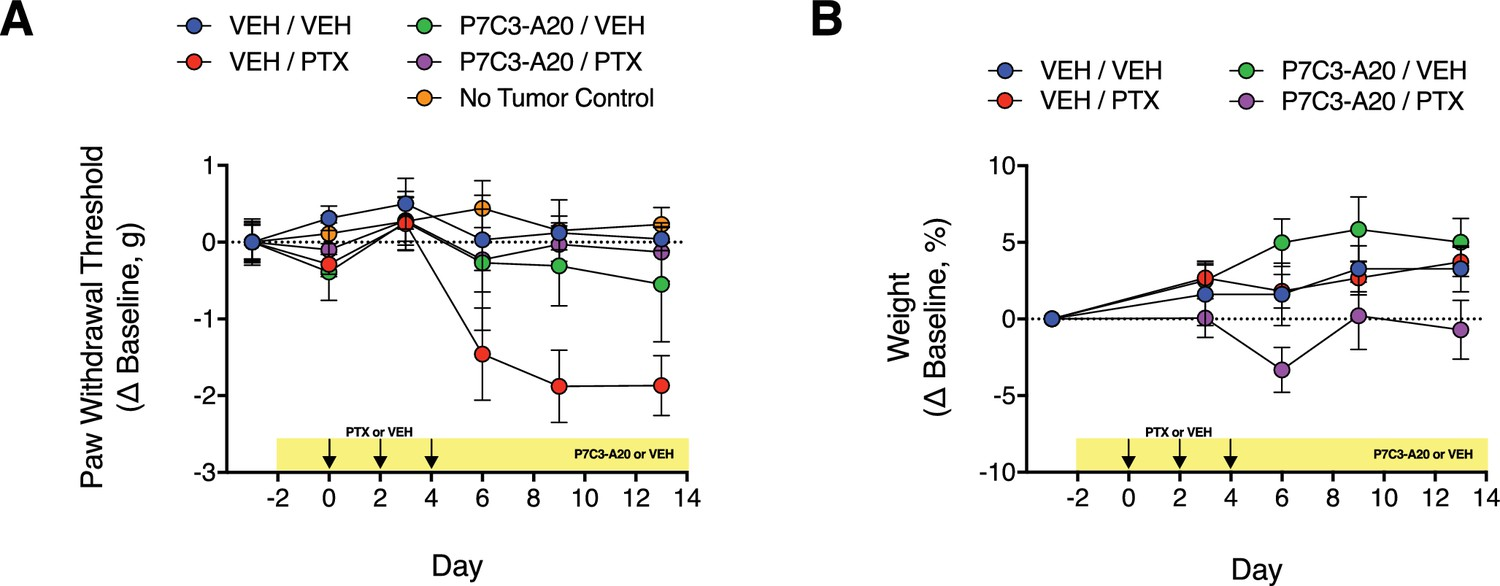 Pharmacological Augmentation Of Nicotinamide Photocell Based Night Light By Ua741 Effect P7c3 A20 On Ptx Induced Mechanical Allodynia And Body Weight In Mice With Implanted Mda Mb 231 Tumor Xenografts