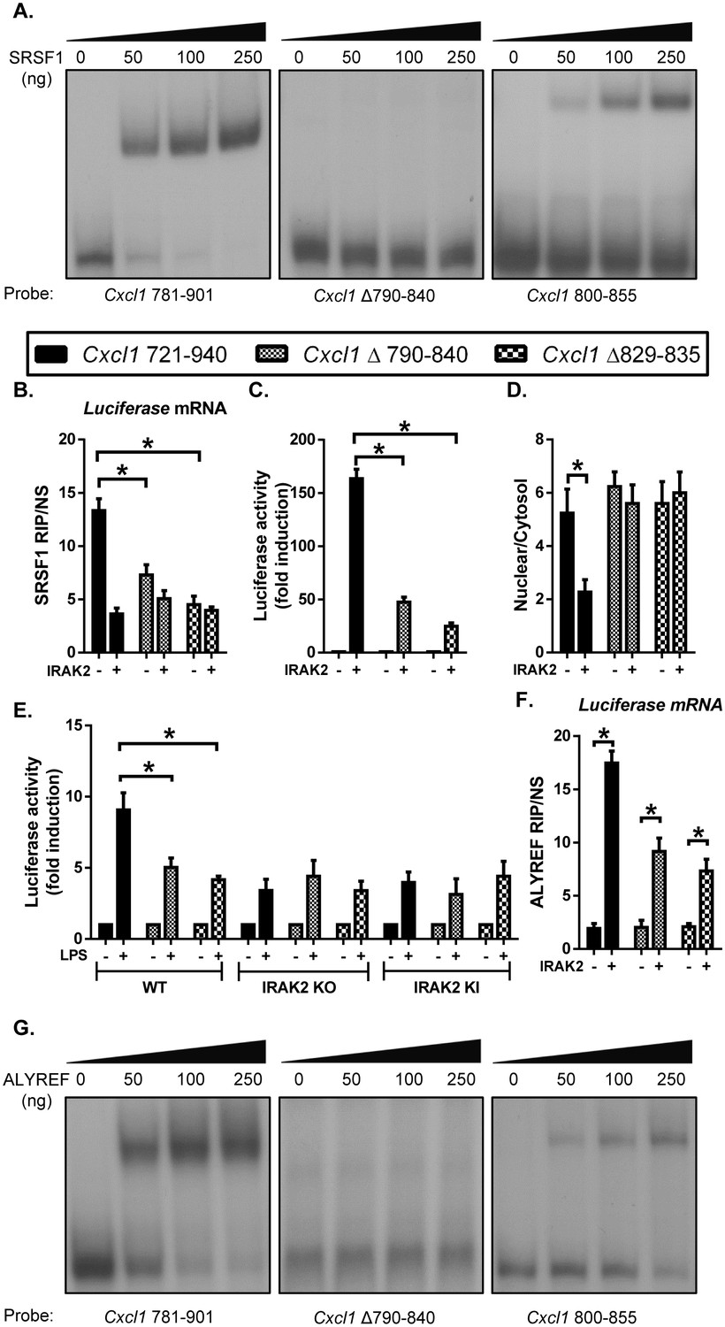Irak2 Directs Stimulus Dependent Nuclear Export Of Inflammatory Hand Drawn Circuit Board Schematics Bing Images Srsf1 Binding Renders The Lps Sensitivity Target Mrnas For Their