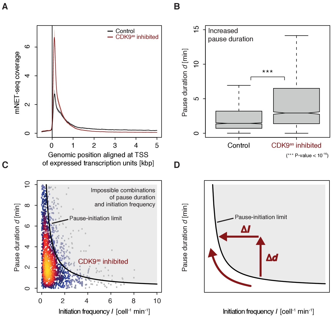 CDK9-dependent RNA polymerase II pausing controls