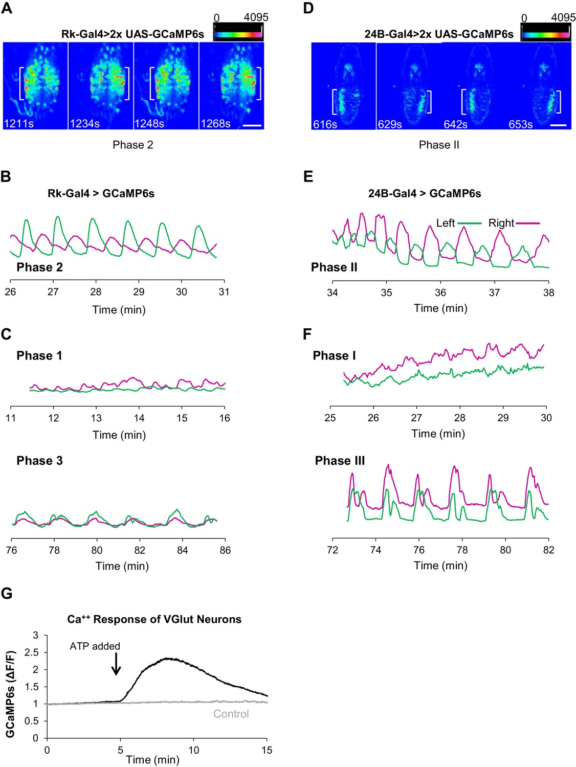 Neuromodulatory Connectivity Defines The Structure Of A Behavioral Bulletin Board Service Motorized Grain Mill Wiring Question Help Rk Expressing Neurons Act In Central Pattern Generation