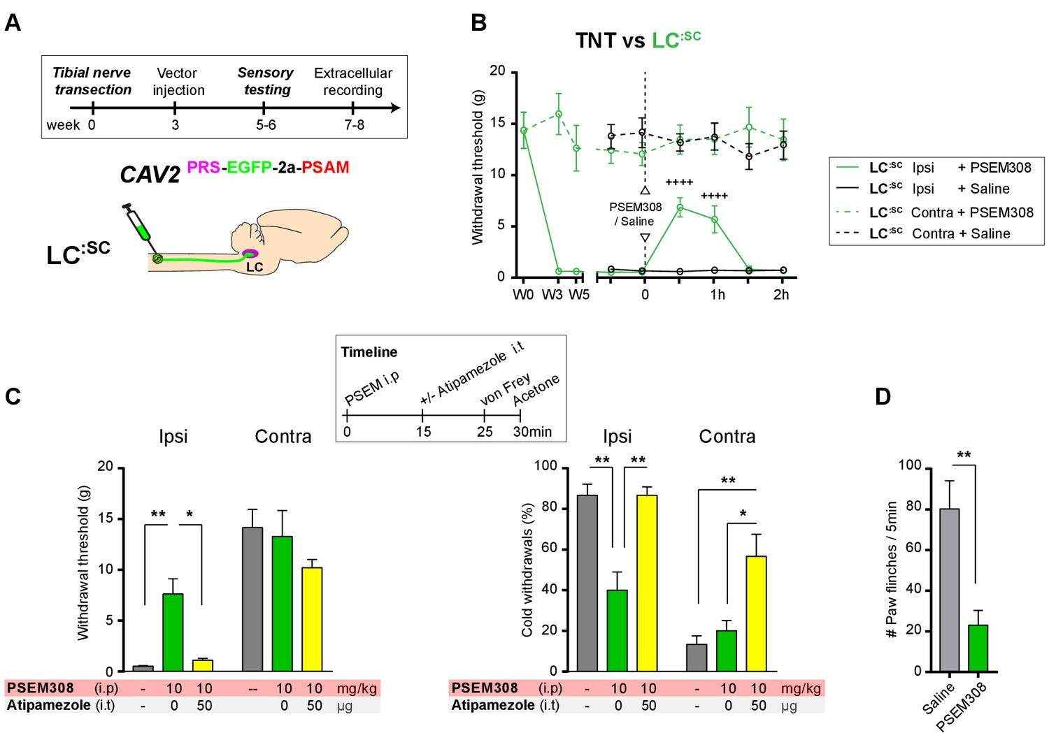 Functional Dichotomy In Spinal Vs Prefrontal Projecting Locus Thermo King Erc Tc Unit Wiring Schematic Diagram Manual Chemogenetic Activation Of Lcsc As An Intervention For Established Neuropathic Pain
