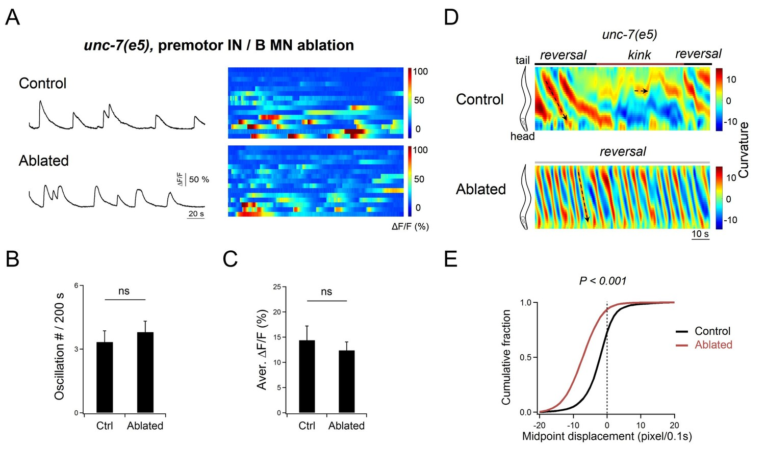 Excitatory Motor Neurons Are Local Oscillators For Backward The Circuit Does This With A Simple Oscillator Oscillator39s Main Da9 Oscillation Is Not Changed In Unc 7 Mutant Animals After Removal Of Premotor Ins And B Mns