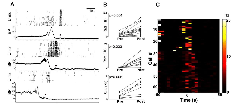 pmc neuronal activity of each rat