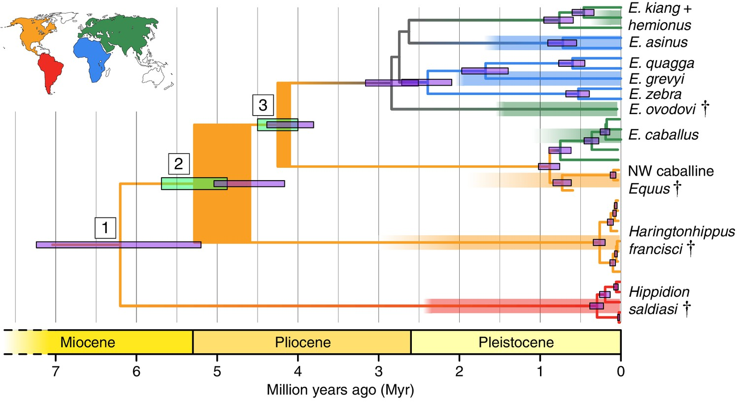 A new genus of horse from Pleistocene North America | eLife