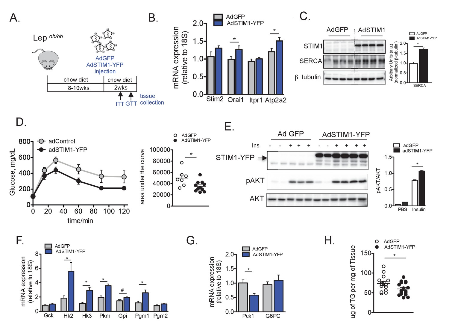 Defective Stim Mediated Store Operated Ca2 Entry In Hepatocytes Simple Circuit Diagram For Detecting Loss Of 4 20 Ma Signal Overexpression Stim1 Leads To Improved Insulin Signaling Glucose Tolerance And Lipid Accumulation Obese Animals