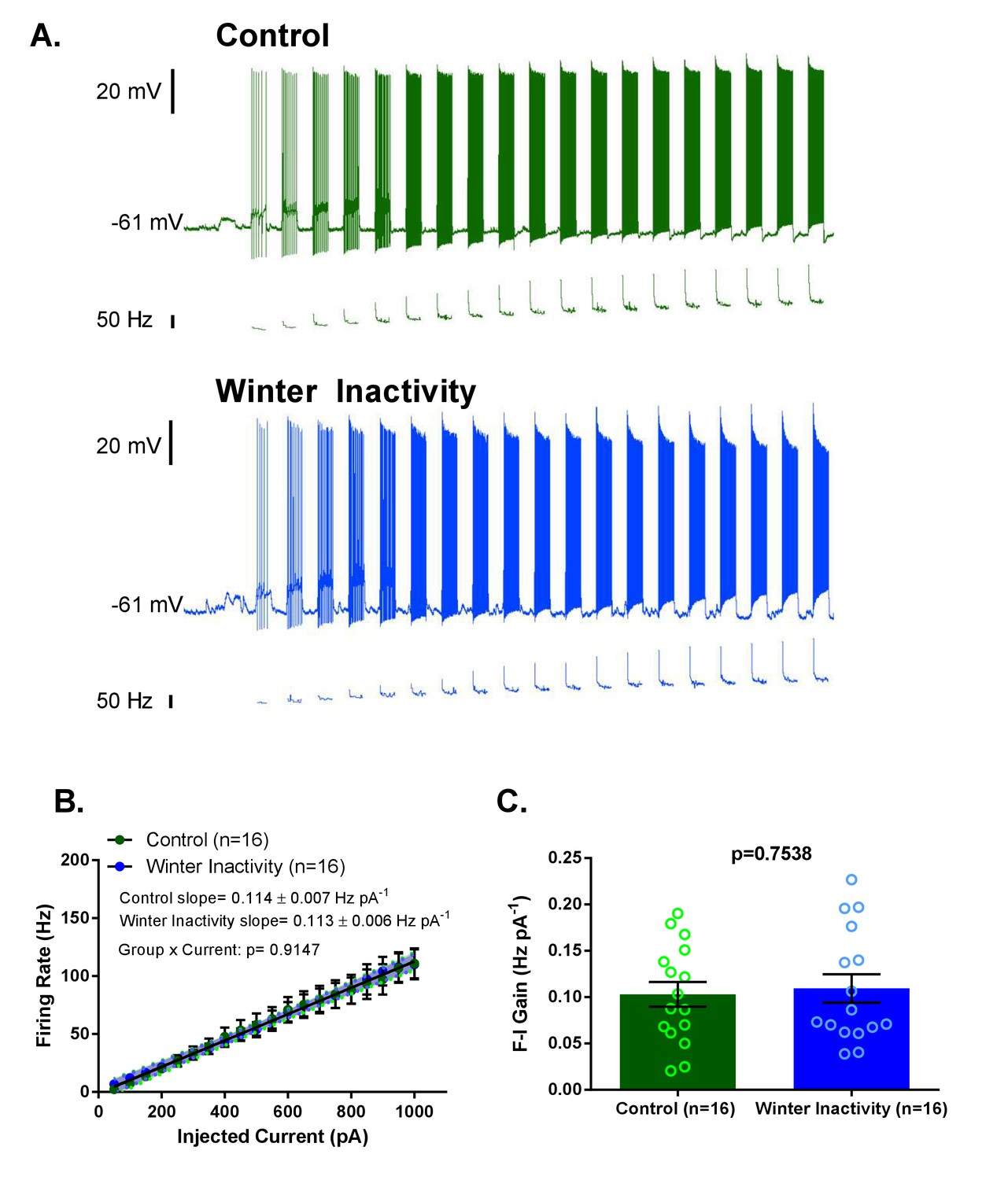 Synaptic Up Scaling Preserves Motor Circuit Output After Chronic Newman Wiring Diagram Increases In F I Frequency Current Gain Do Not Accompany Of Excitatory Synapses