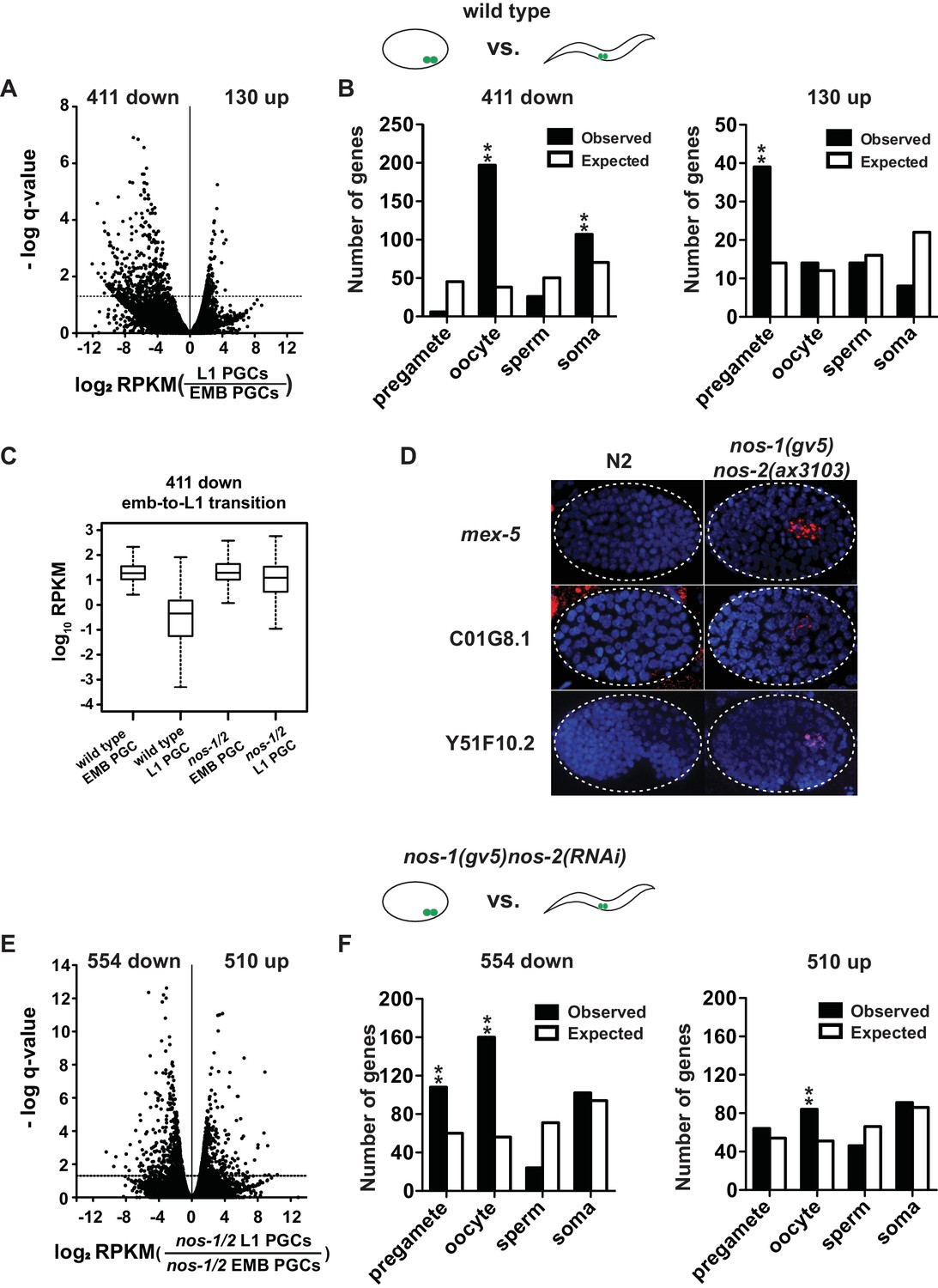 Nanos Promotes Epigenetic Reprograming Of The Germline By Down One Line Electrical Panel Diagram Nos 1nos 2 Pgcs Are Defective In Maternal Mrna Turnover During Embryogenesis