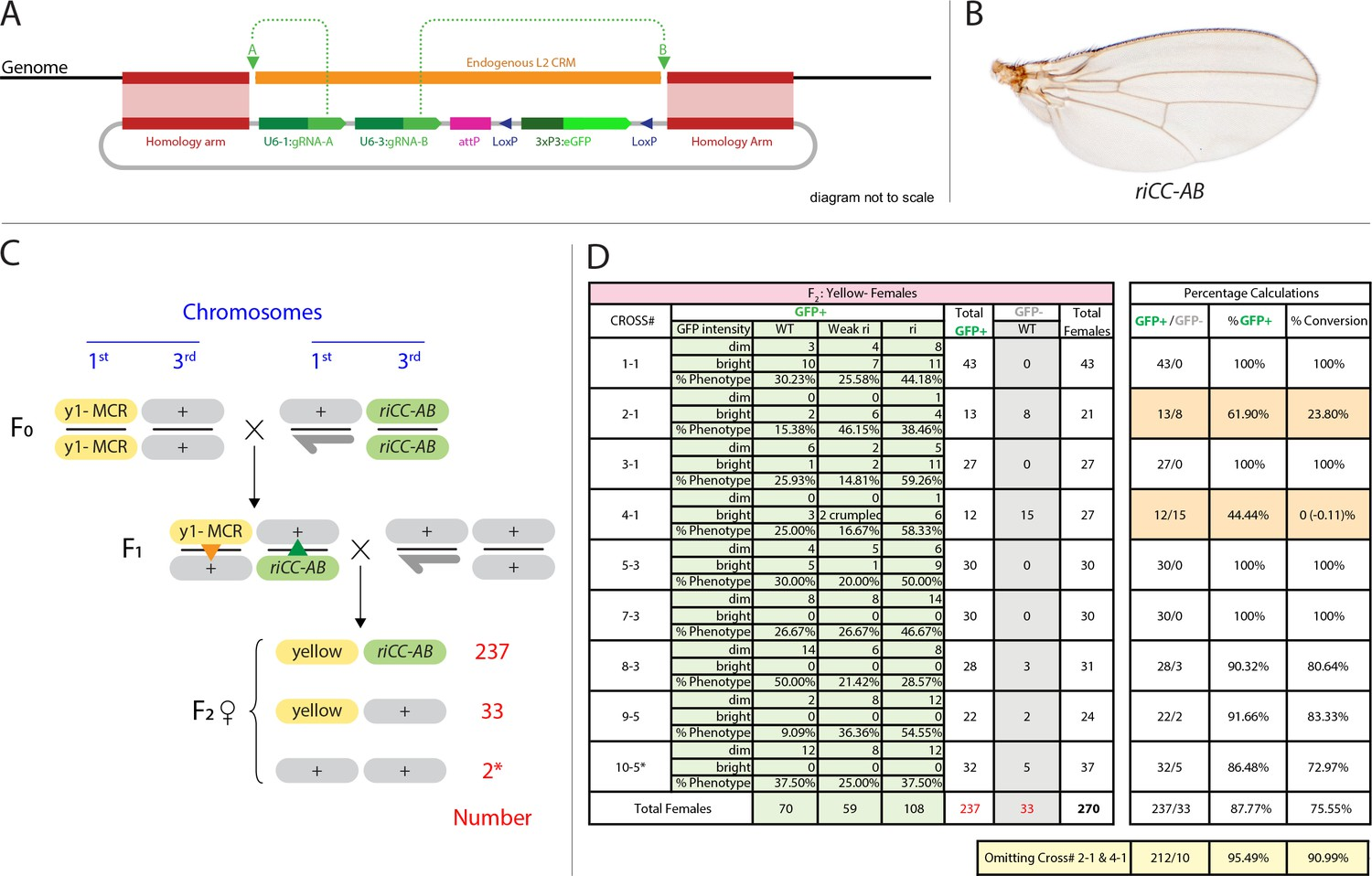 CRISPR/Cas9 and active genetics-based trans-species replacement of