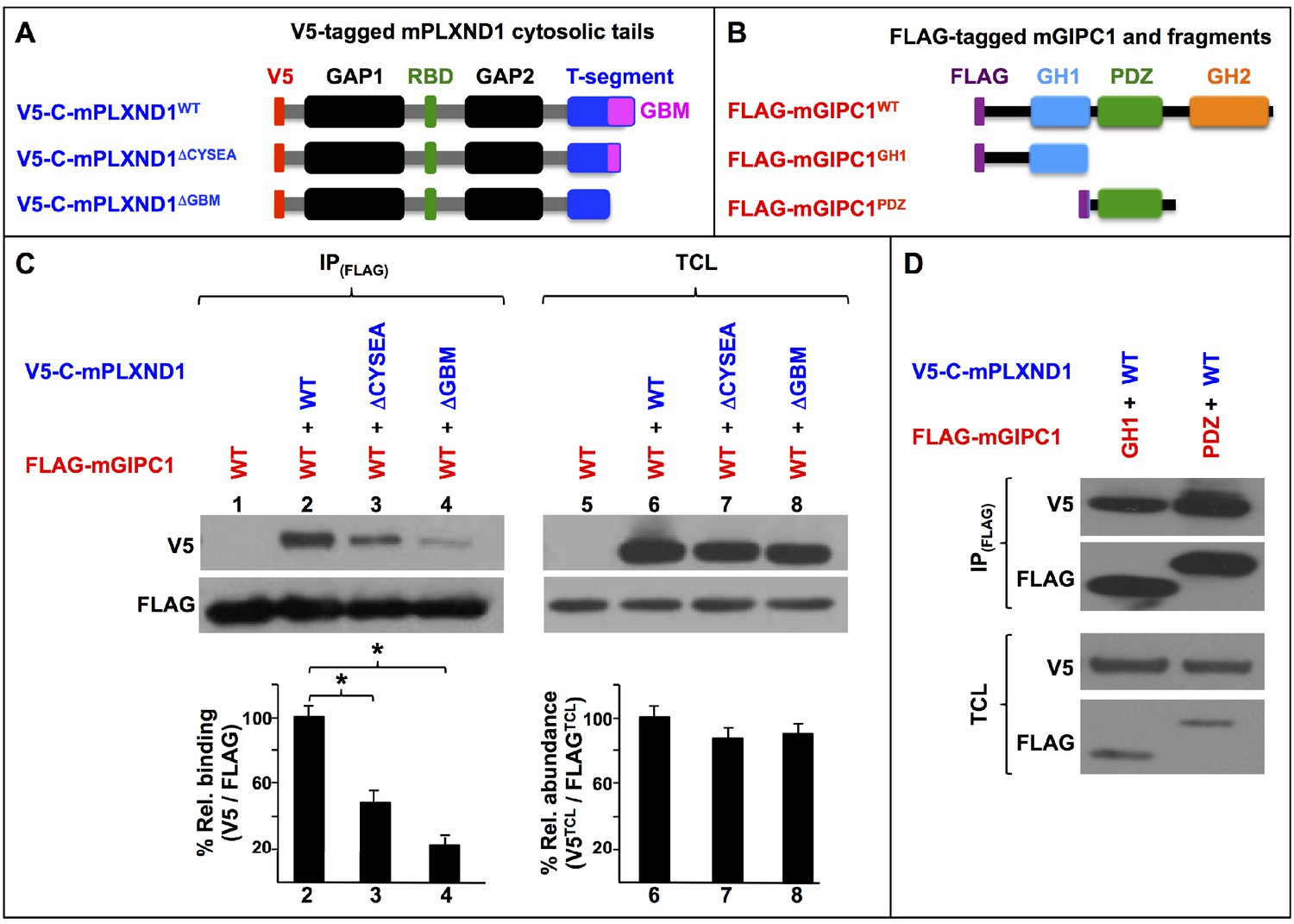 GIPC proteins negatively modulate Plexind1 signaling during