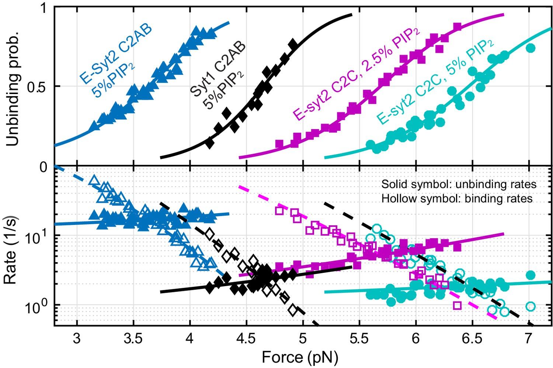 Single-molecule force spectroscopy of protein-membrane