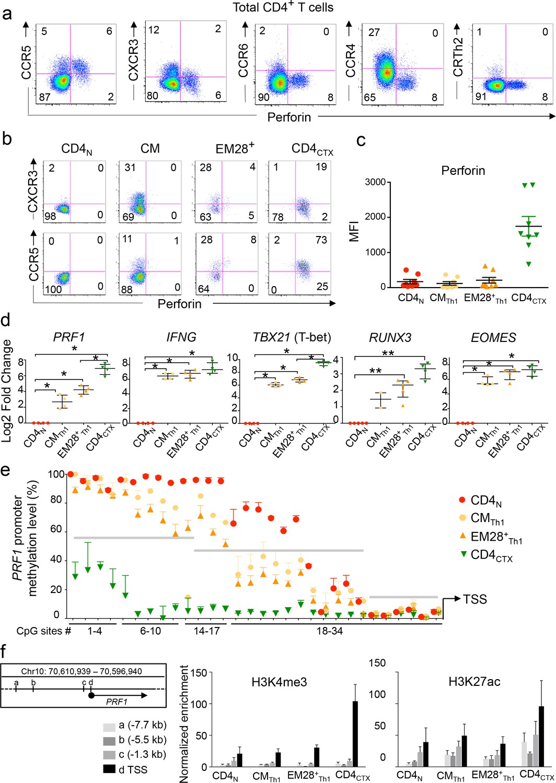 the transcription factors runx3 and thpok cross