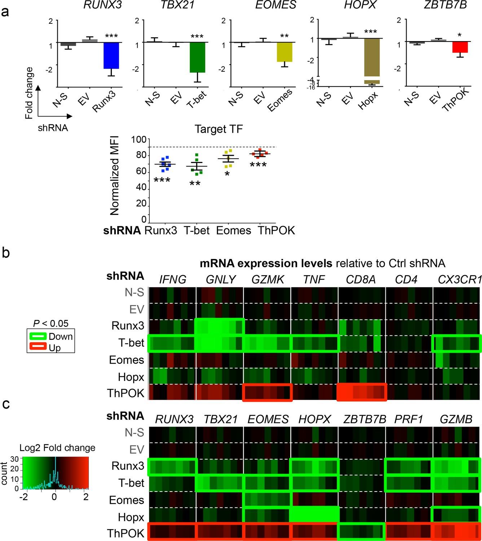 The transcription factors Runx3 and ThPOK cross-regulate acquisition ...