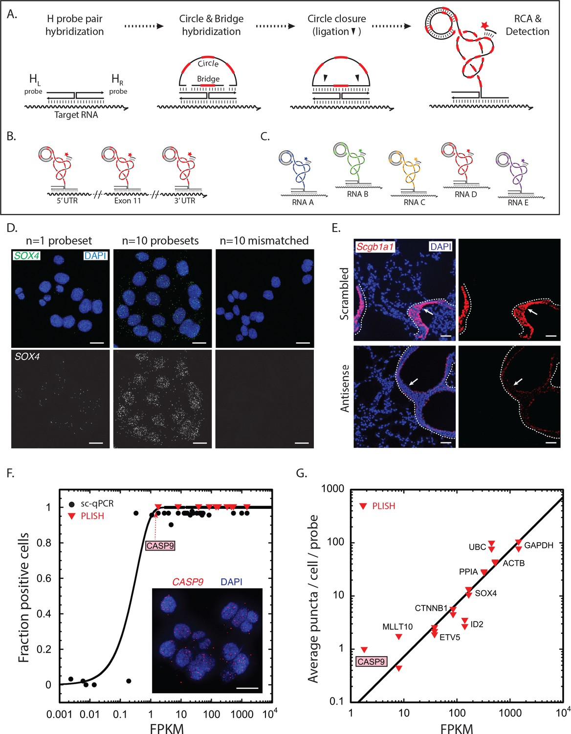 Automated cell-type classification in intact tissues by