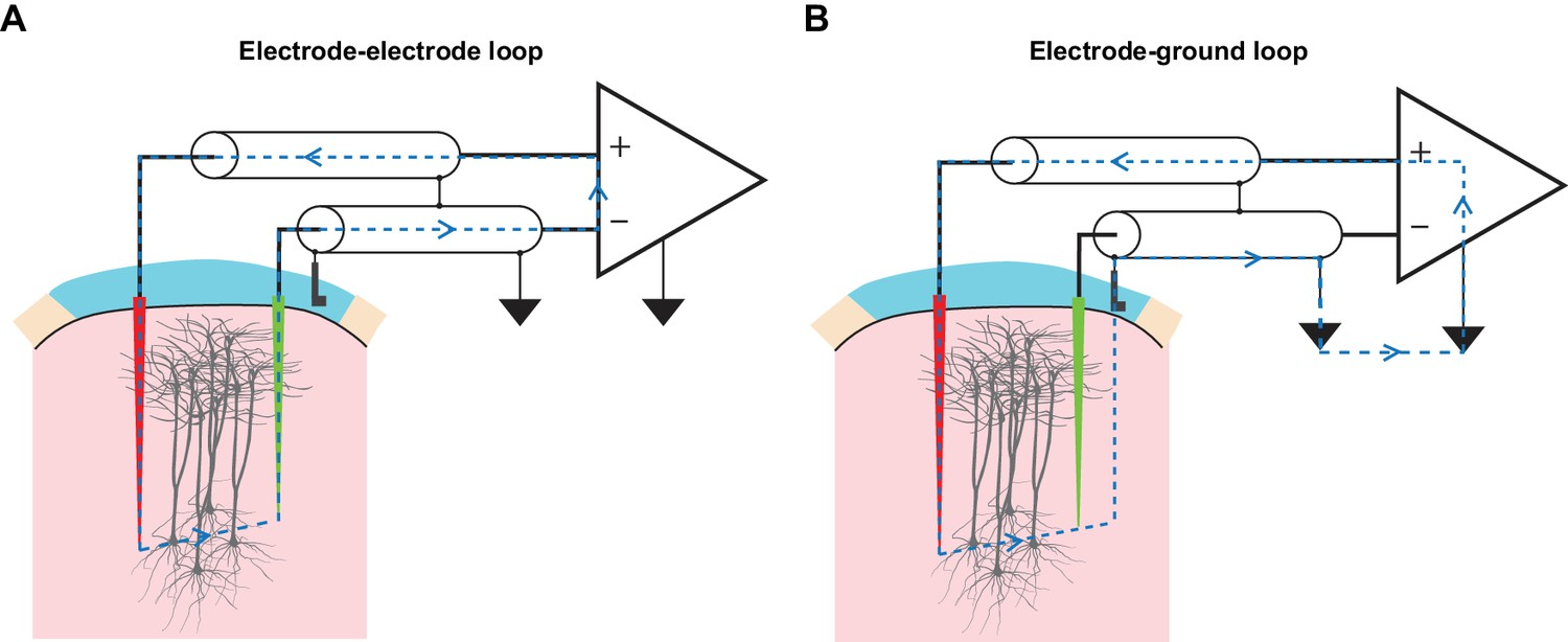 Lifting The Veil On Dynamics Of Neuronal Activities Evoked By Longinterval Pulse Generator Circuit Diagram Tms Drives Inadvertent Charge Injection In Multiple Loops Formed An Eep Recording Assembly