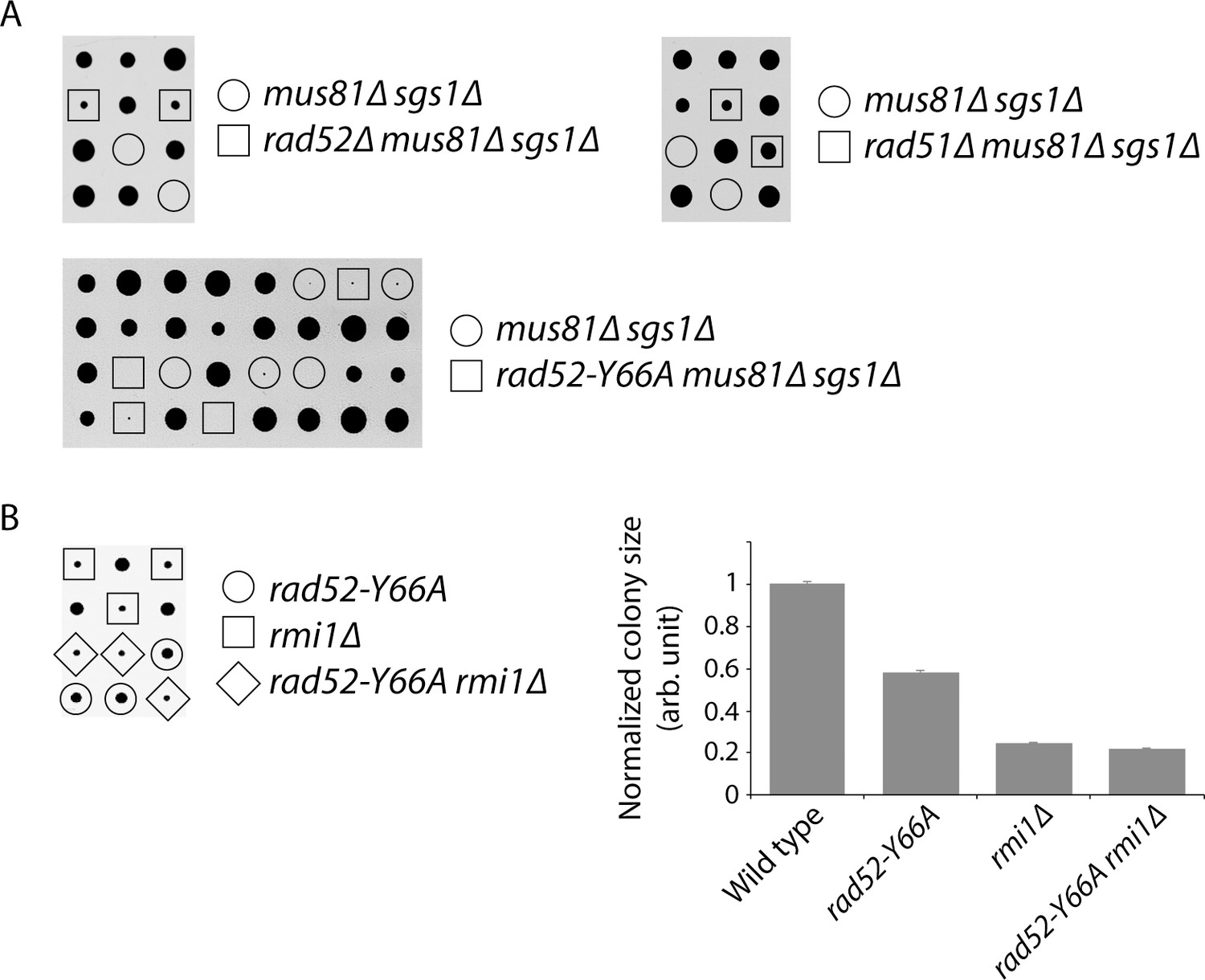 Genome-wide mapping of sister chromatid exchange events in