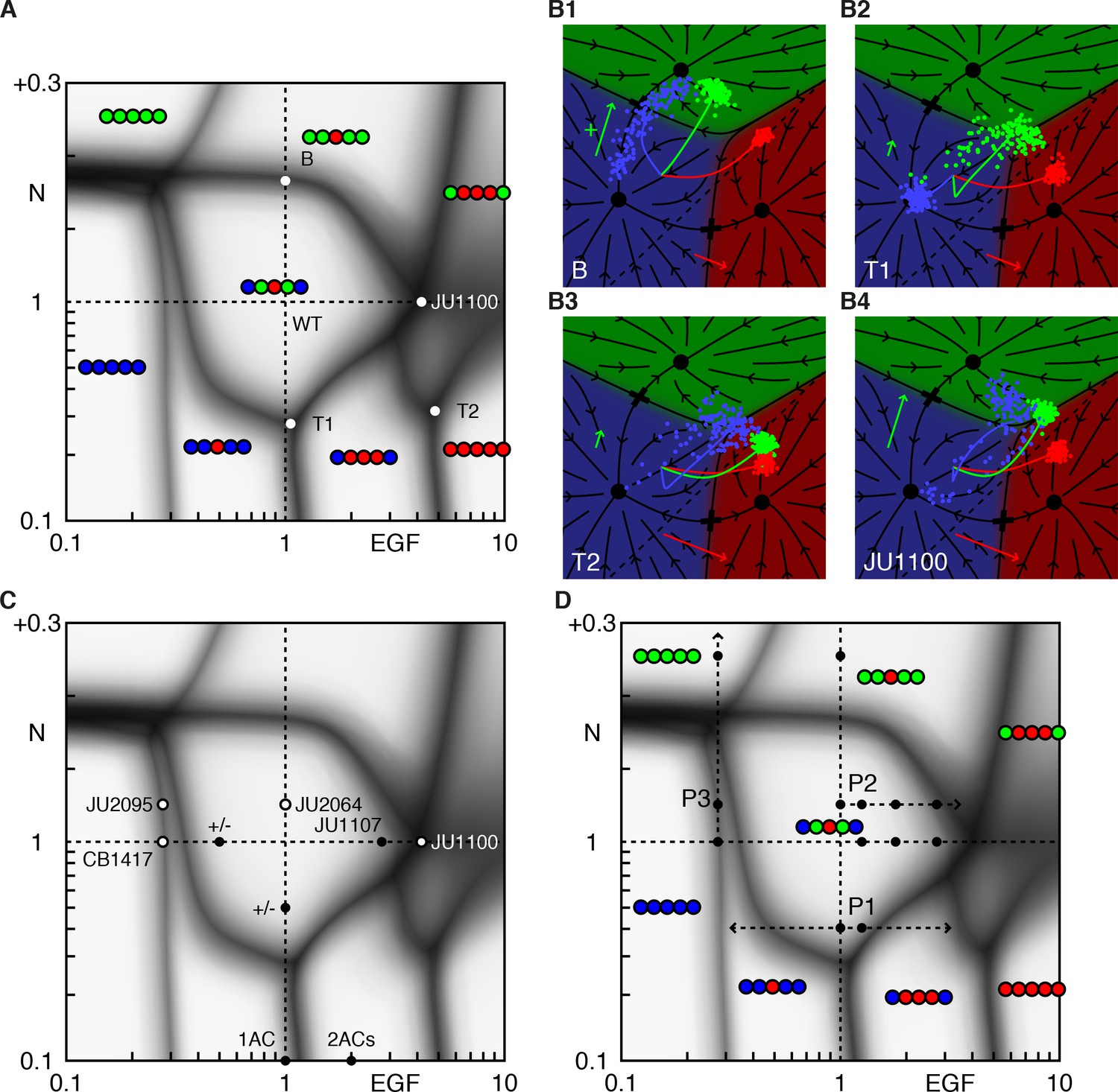 Gene Free Methodology For Cell Fate Dynamics During Development Elife State Diagrams Are A Powerful Mechanism Formalizing That Phase Diagram Of The Model
