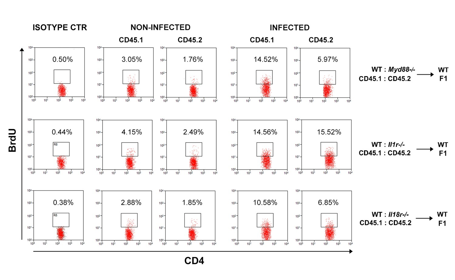 Crucial role for T cell-intrinsic IL-18R-MyD88 signaling in cognate