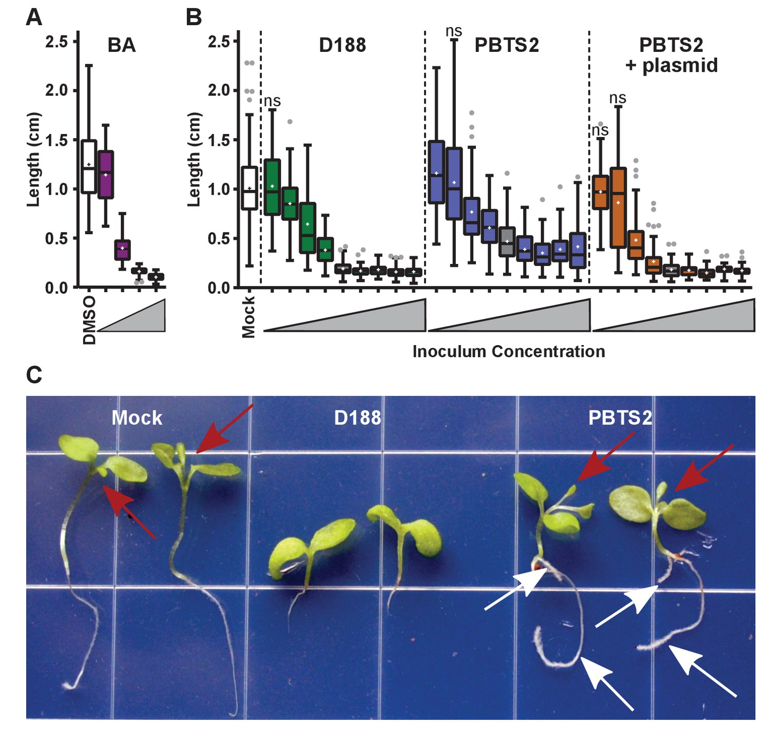 Evolutionary Transitions Between Beneficial And Phytopathogenic Diagram Moreover 2004 Mercedes E320 Transmission Dipstick On Rhodococcus Has A Dose Dependent Effect The Root Elongation Of N Benthamiana Seedlings