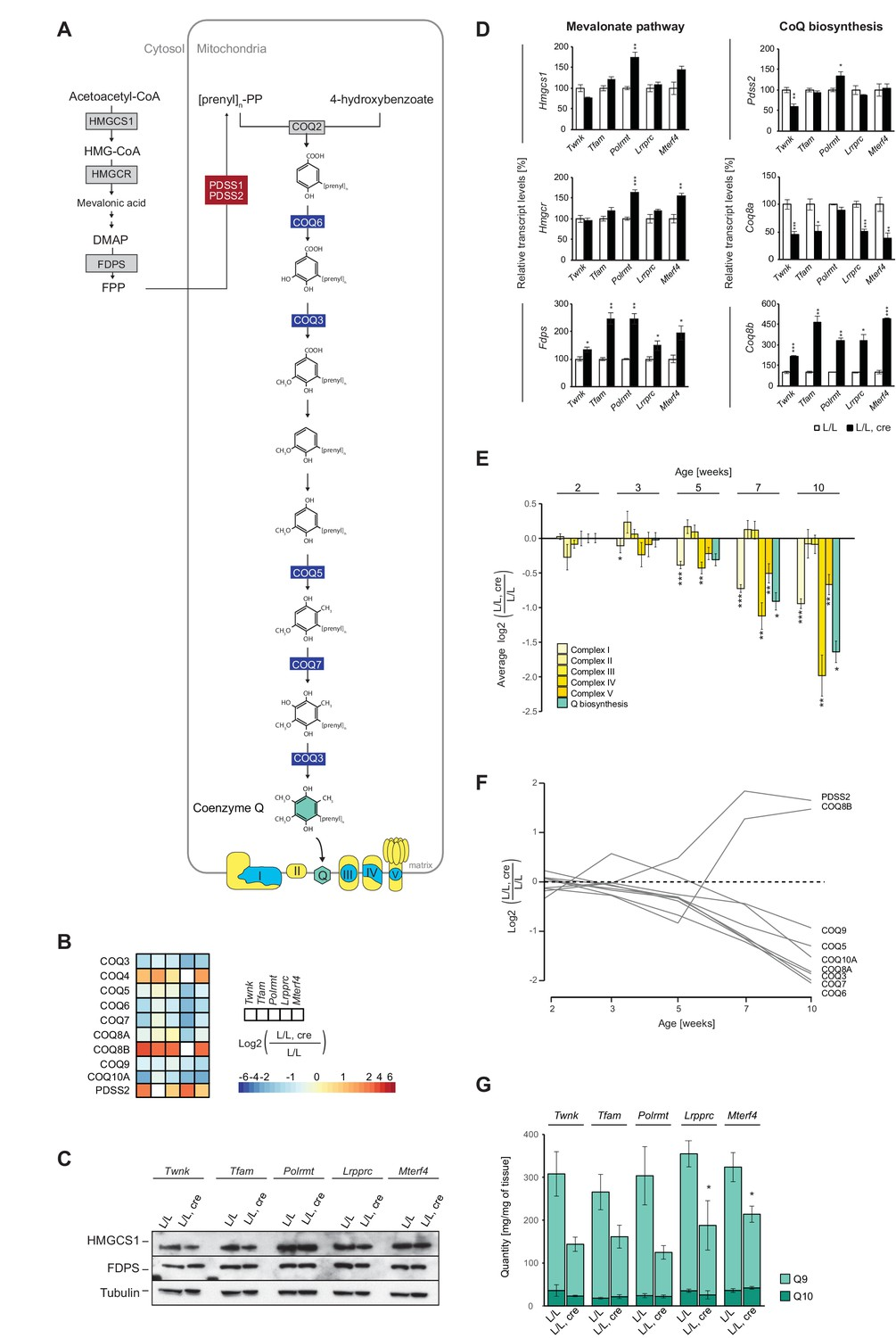 Transcriptomic And Proteomic Landscape Of Mitochondrial Dysfunction