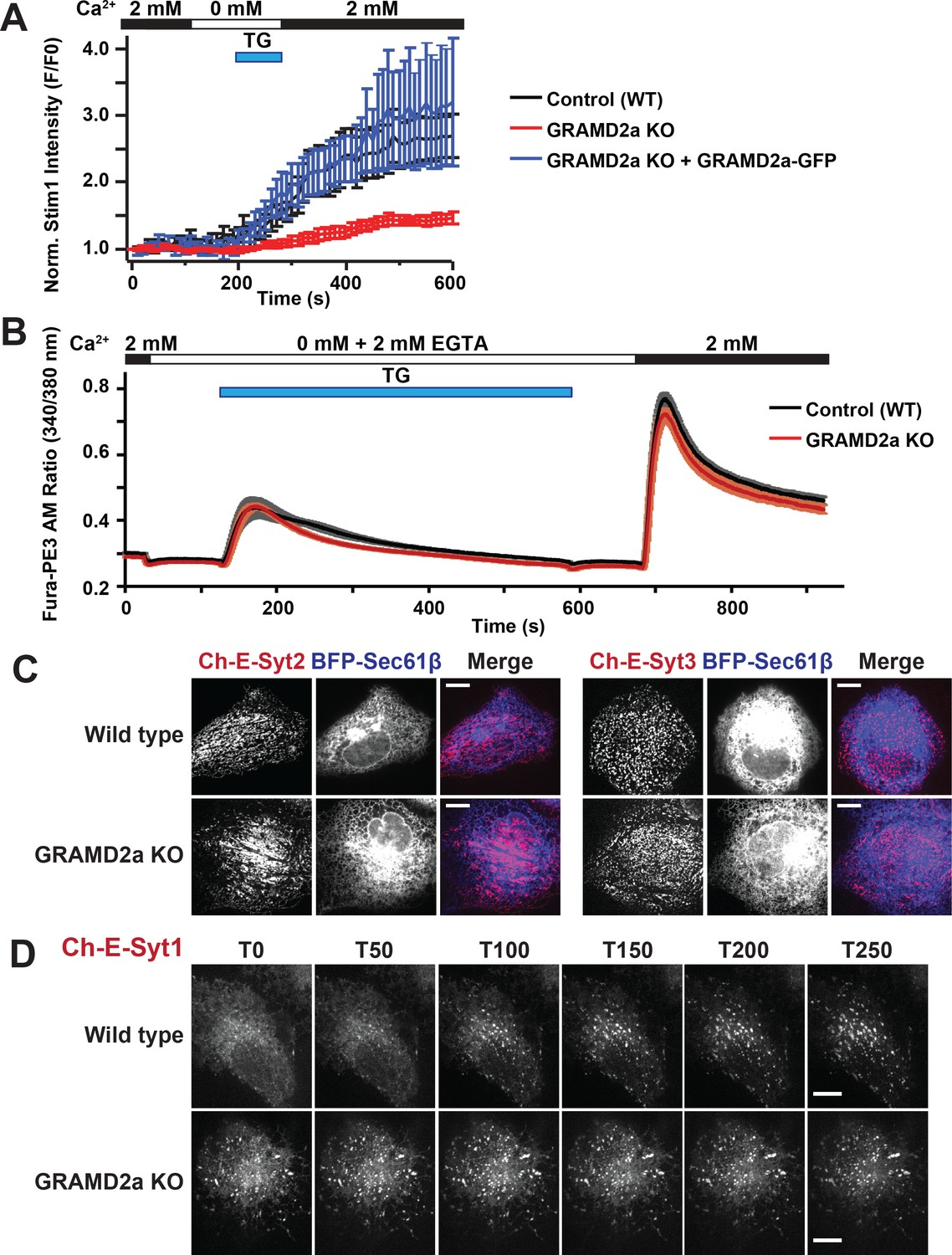 GRAM domain proteins specialize functionally distinct ER-PM contact