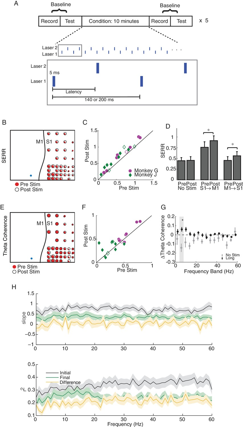 Targeted Cortical Reorganization Using Optogenetics In Non Human Nippon Central Locking Wiring Diagram Single Site And Long Latency Stimulation Increase The Functional Connectivity Between M1 S1