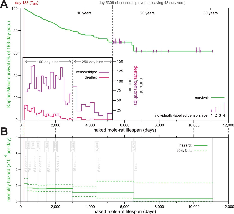 (PDF) Naked Mole-Rat mortality rates defy gompertzian laws