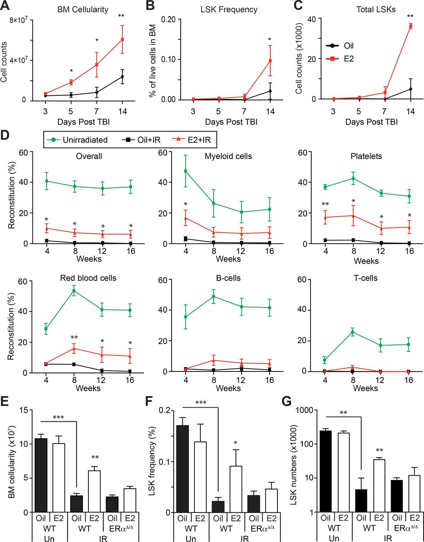 Er Promotes Murine Hematopoietic Regeneration Through The Ire1 Pna L Block Diagram Estrogen Hspc After Irradiation