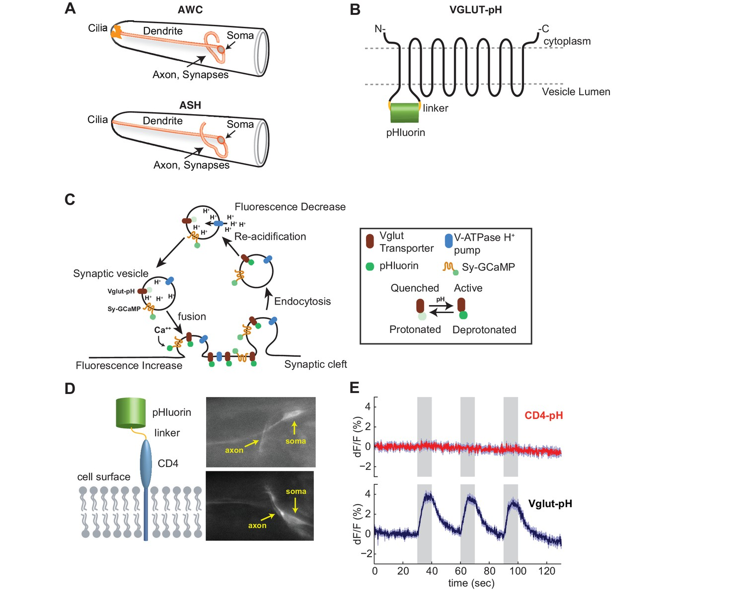Diverse Modes Of Synaptic Signaling Regulation And Plasticity
