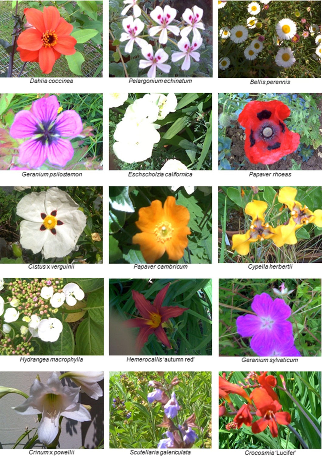 The Diversity Of Floral Temperature Patterns And Their Use By