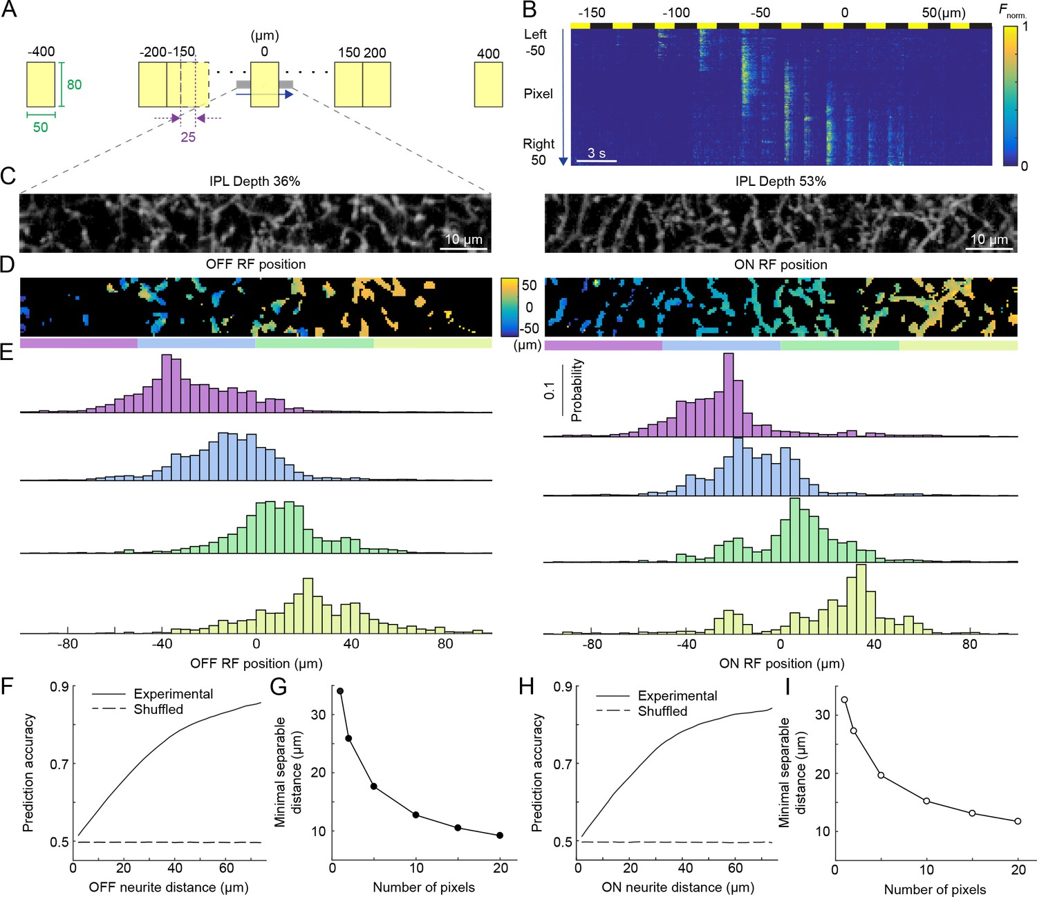 Local Processing In Neurites Of Vglut3 Expressing Amacrine Cells Ac Voltage Detector Circuit Related Keywords Suggestions Population Activity The Vg3 Plexus Encodes Spatial Information With High Precision