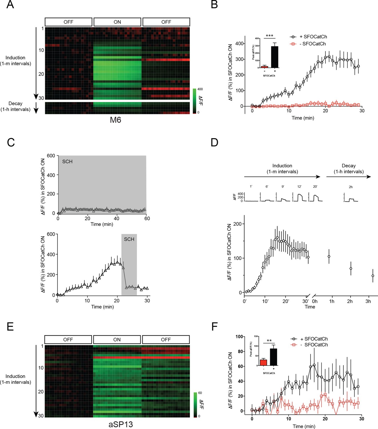 Persistent Activity In A Recurrent Circuit Underlies Courtship Digest Electronic Circuits Projects Community Repetitive Stimulation Of Mb Potentiates To M6 Transmission