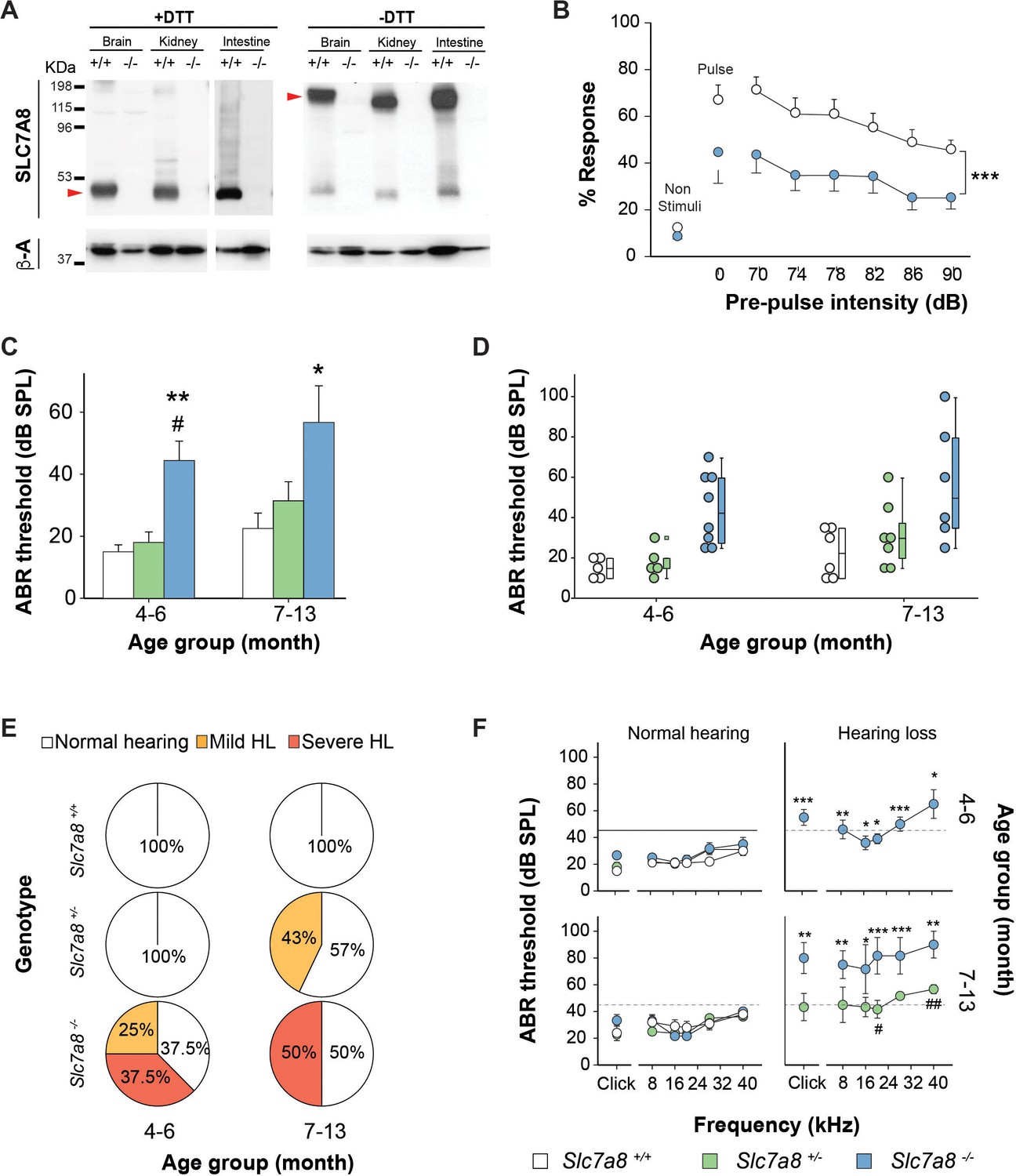 Mutations in L-type amino acid transporter-2 support SLC7A8