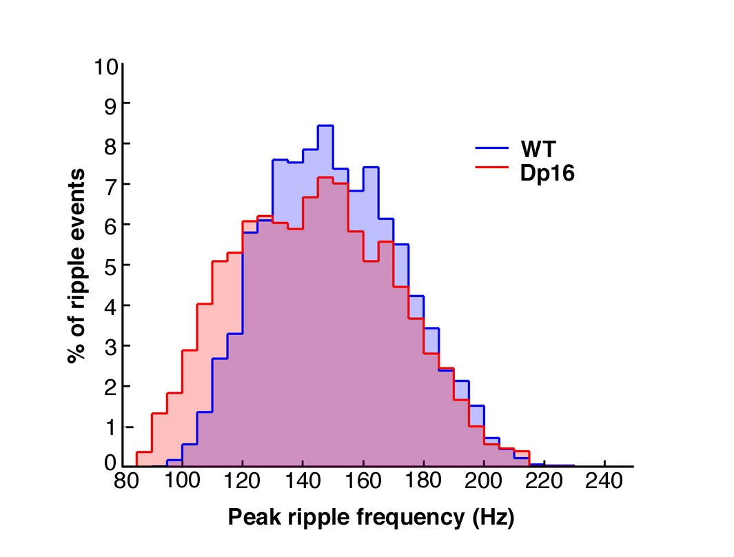 Alterations Of In Vivo Ca1 Network Activity Dp161yey Down Sonac 220 Wiring Diagram Sharp Wave Ripple Peak Frequency Was Not Significantly Affected Mice