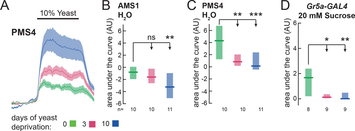 Internal amino acid state modulates yeast taste neurons to support