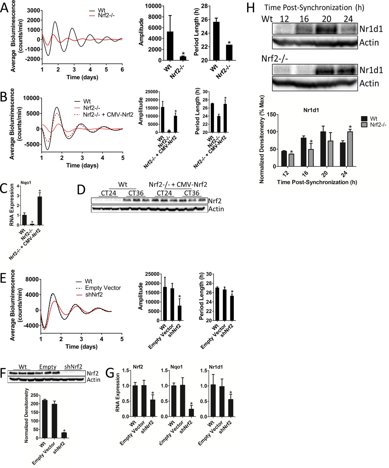 Nrf2 Regulates Core And Stabilizing Circadian Clock Loops Coupling Data Sync Engineering Schematics Is Required For Normal Timekeeping