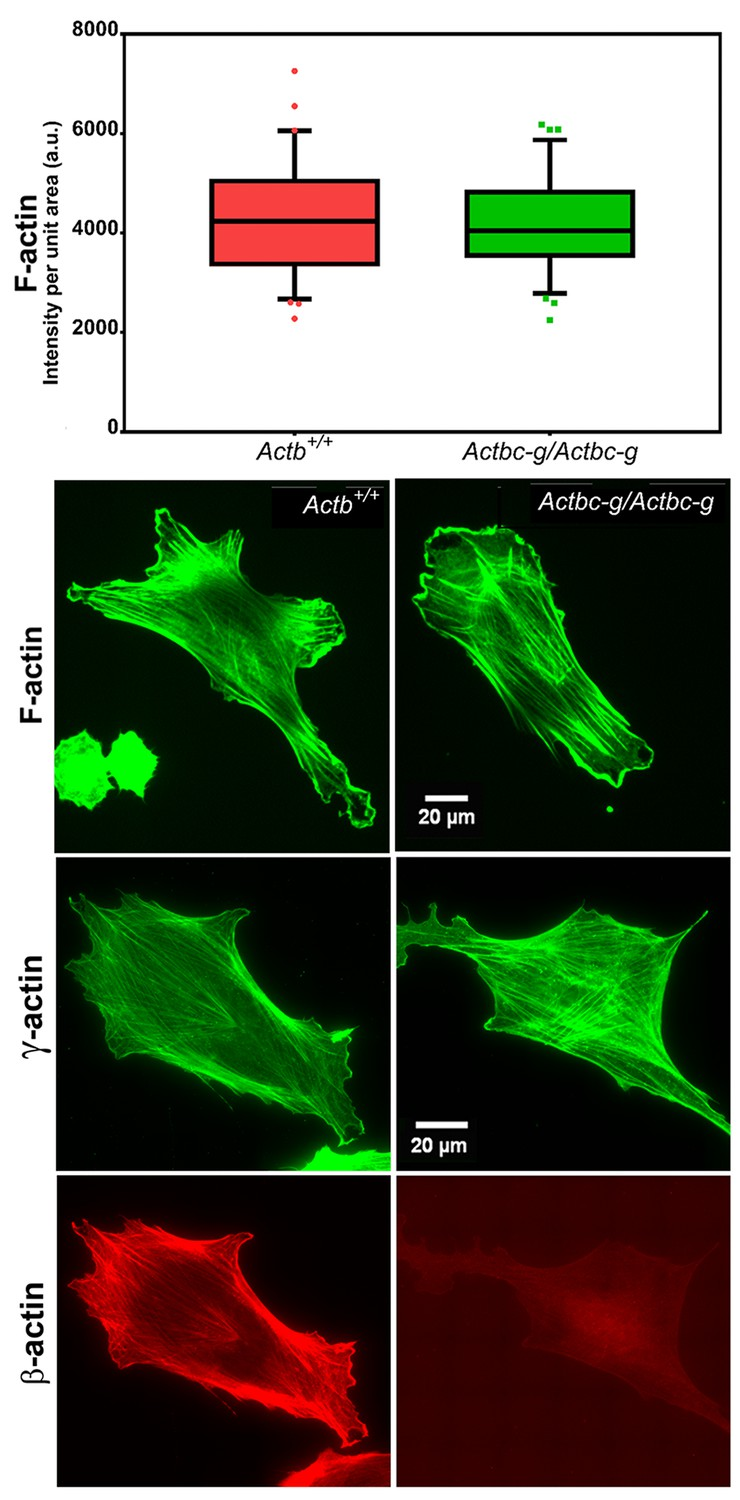 Diverse functions of homologous actin isoforms are defined