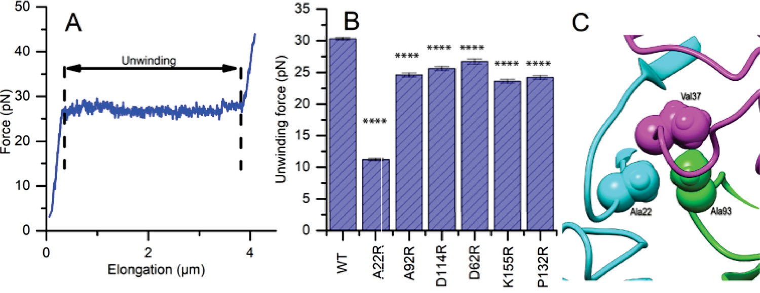 Functional role of the type 1 pilus rod structure in