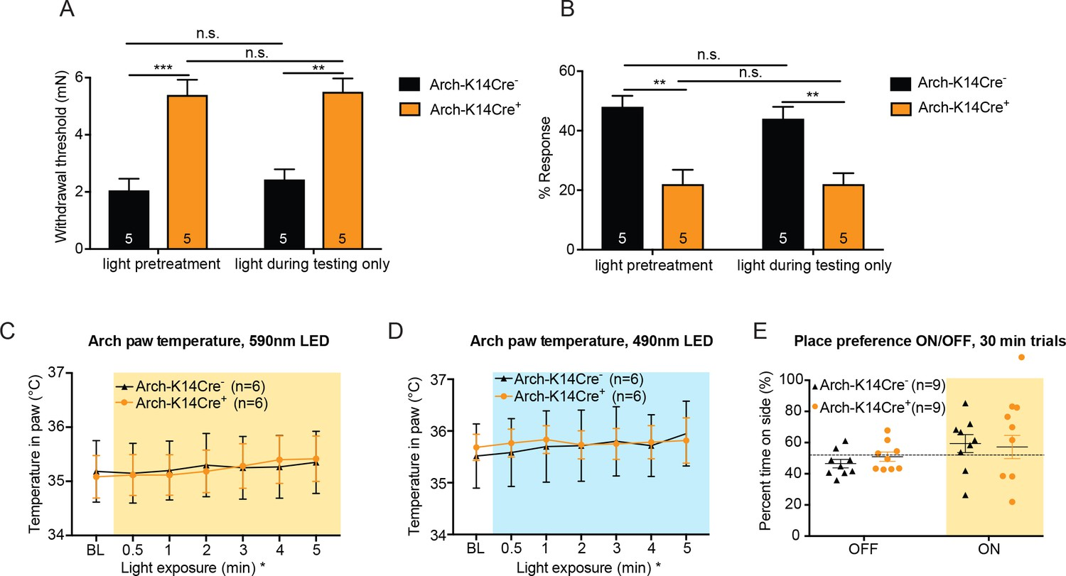 Keratinocytes Mediate Innocuous And Noxious Touch Via Atp P2x4 Simple Light Organ Circuit Diagram Project With Effects Pre Treatment Is Not Necessary To Observe Full Behavior Temperature Increase In The Skin Due Fluorophore Activation 590 Nm