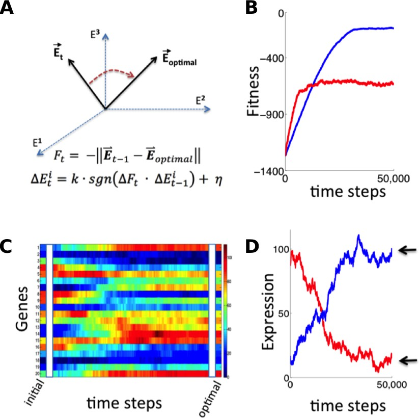 Stochastic Tuning Of Gene Expression Enables Cellular Adaptation In