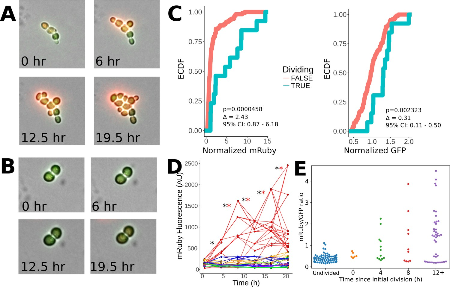 Stochastic Tuning Of Gene Expression Enables Cellular Adaptation In Figure 435 Rc Integrator Circuit Heritability Elevated Mruby Levels During