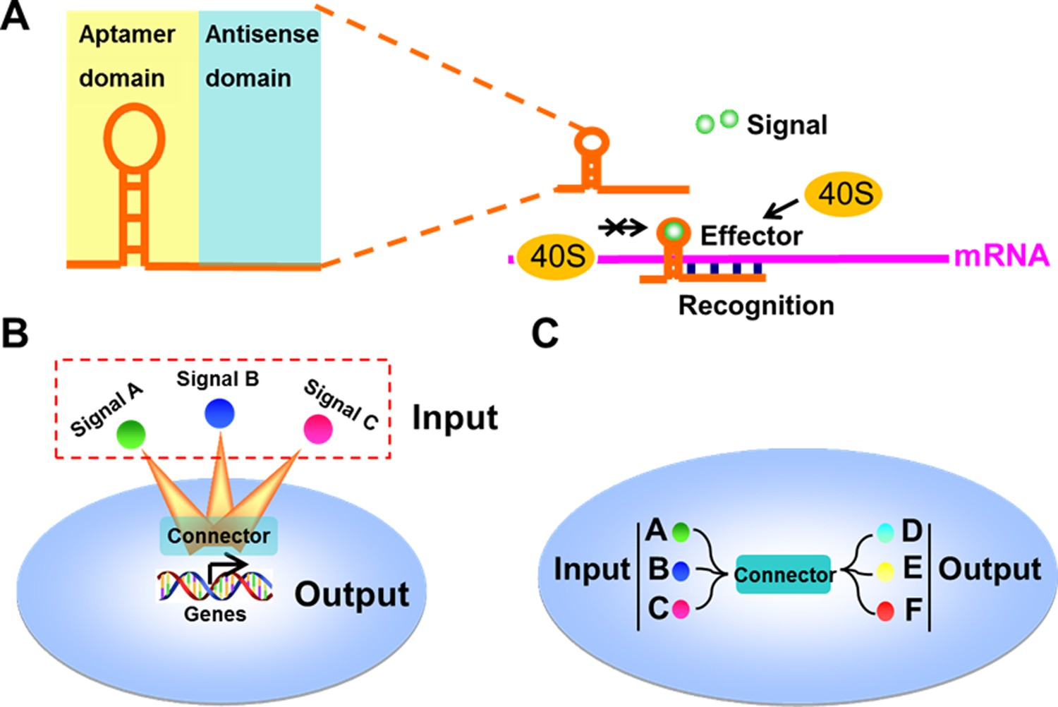 Synthesizing Artificial Devices That Redirect Cellular Information Basis Of Different Regulator Types Principles Genetic Circuit Design And Construction The Signal Connectors For Constructing Linkages Between Signaling Nodes