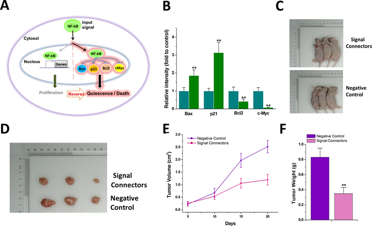 Synthesizing Artificial Devices That Redirect Cellular Information Basis Of Different Regulator Types Principles Genetic Circuit The Signal Connector Induces Simultaneous Activation And Repression Genes In Response To Oncogenic Redirects Signaling