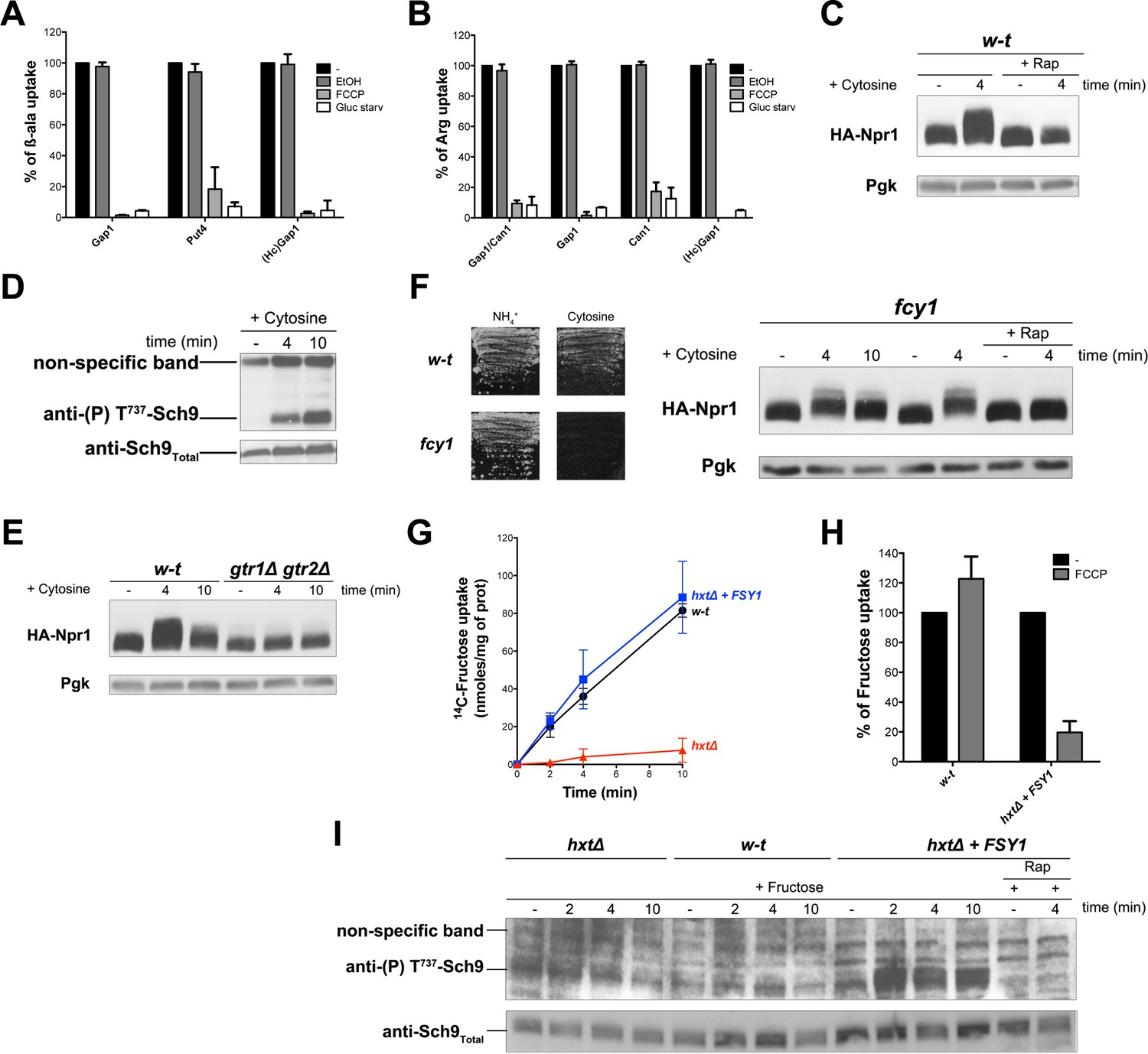 The Yeast H Atpase Pma1 Promotes Rag Gtr Dependent Torc1 Activation Simplestradiationdetectorcircuitwithhvjpg Influx Coupled To Transport Stimulation Of