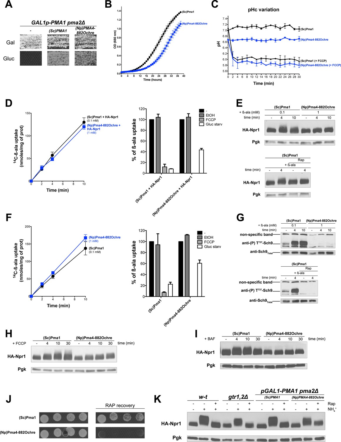 The Yeast H Atpase Pma1 Promotes Raggtr Dependent Torc1 Activation